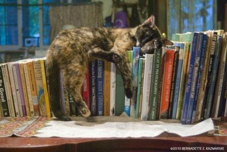 cat-on-books