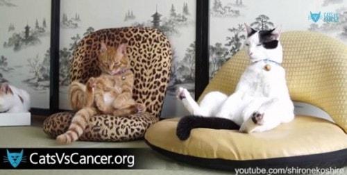 catsvscancer.org