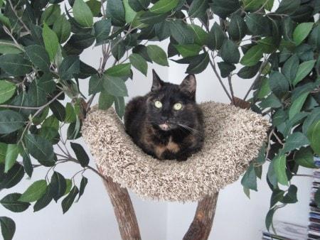 pet-tree-houses-cat-tree