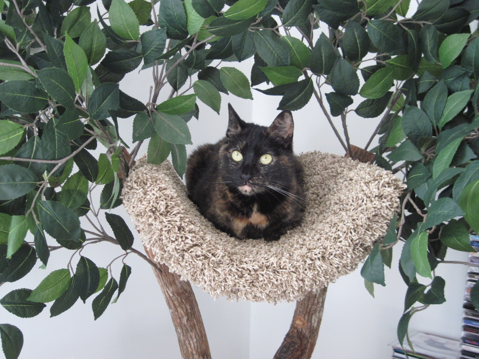 Review Seedling Tree House from Pet Tree Houses The Conscious Cat