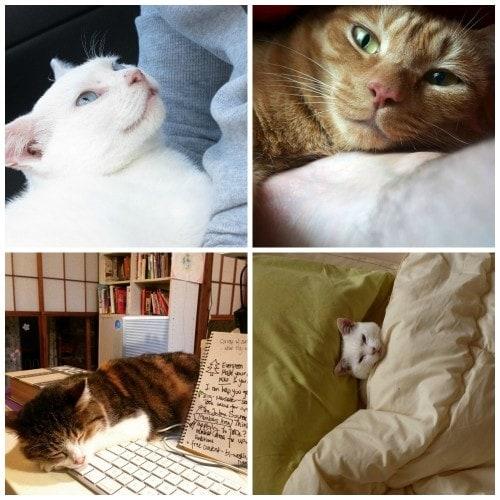 japan-cat-network-fukushima
