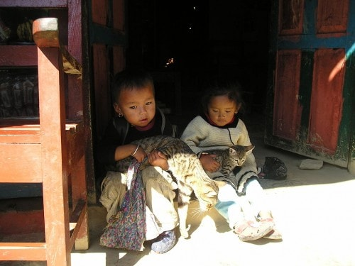 Nepal-animal-rescue