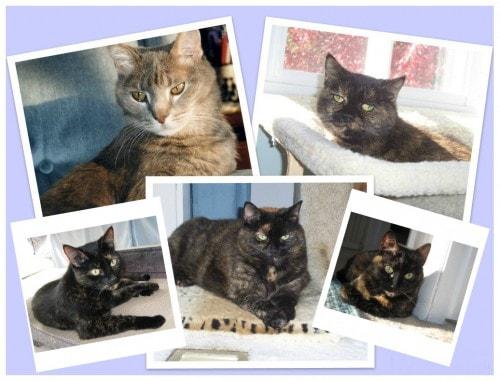cat-photos