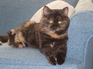 Buckley-feline-master-teacher