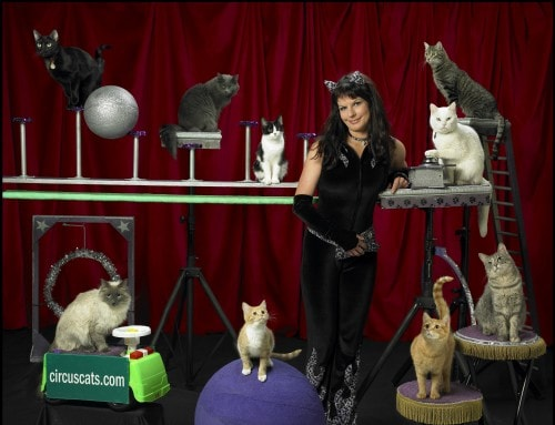 samantha-martin-acro-cats