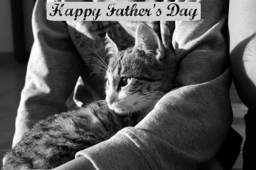 Fathers-day-cat