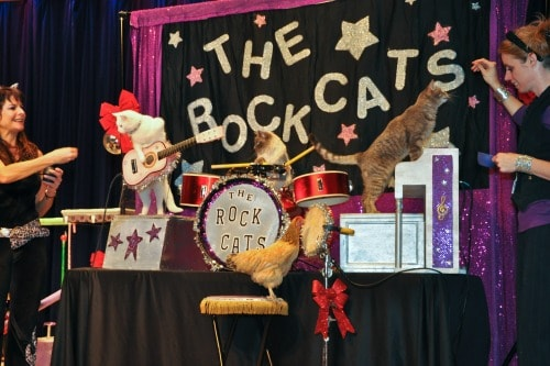 the-rock-cats