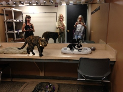 acro-cats-dressing-room