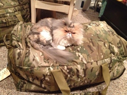 cat-on-bag