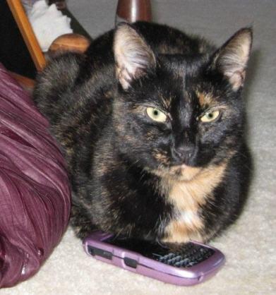 cat-smartphone
