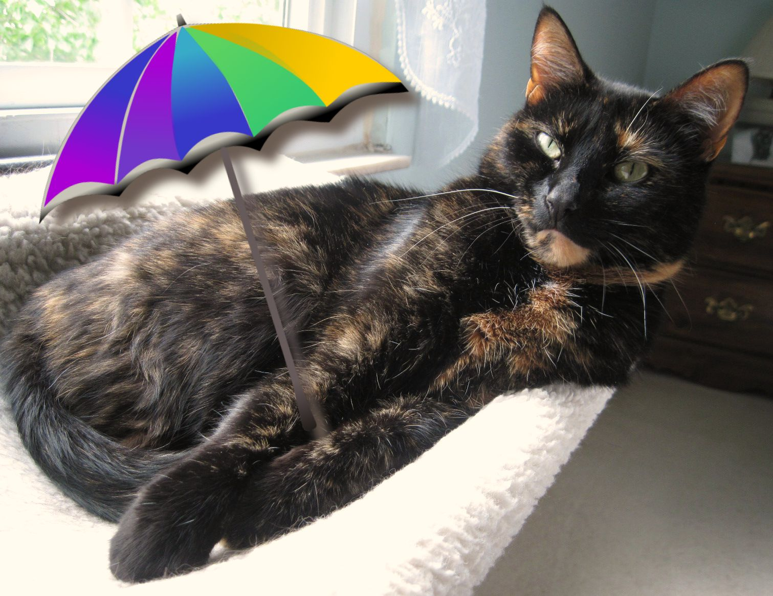 conscious cat sunday are you making summer memories the