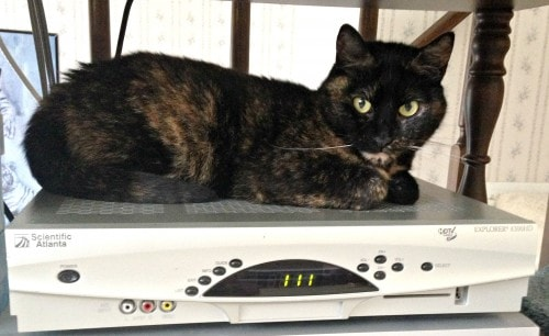 cat-on-cable-box