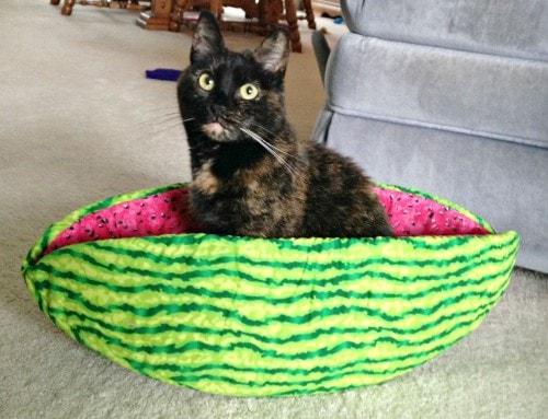 cat-watermelon