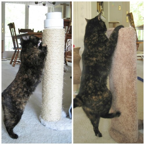 Review: Furniture Protector Cat Scratcher By Kool Kitty Toys