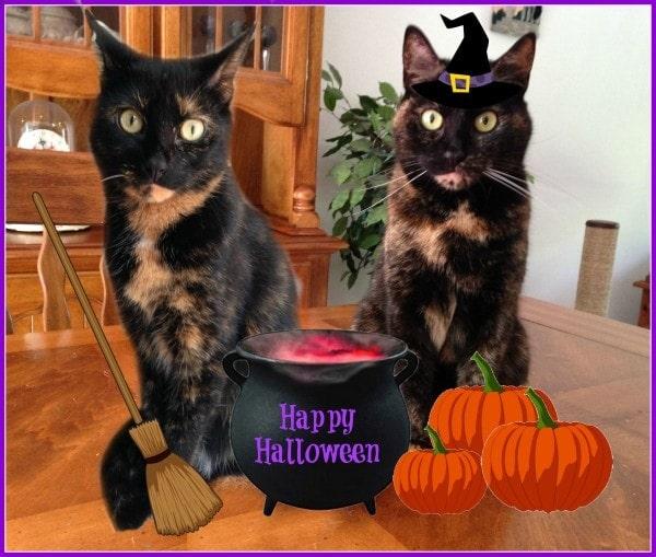 Happy Halloween 2015 - The Conscious Cat
