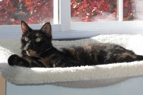 cat-window-perch
