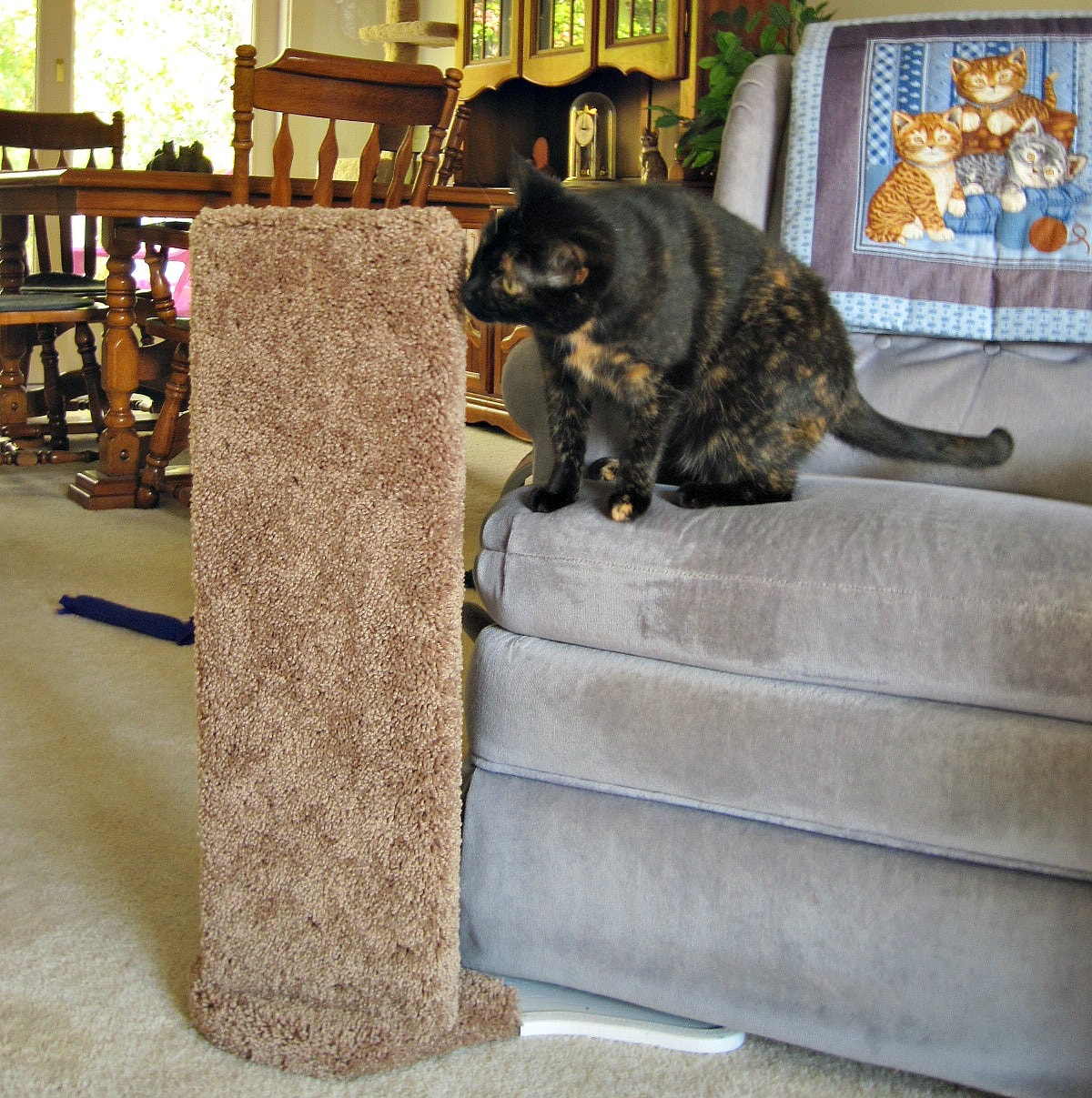 Review Furniture Protector Cat Scratcher By Kool Kitty