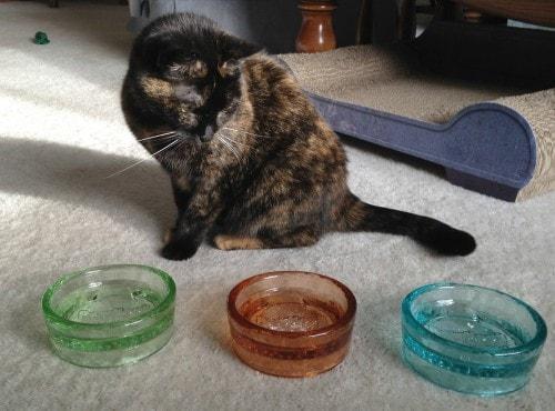 glass-pet-bowls