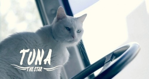 Tuna-Acrocats