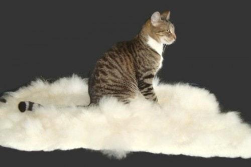 alpaca-cat-mat