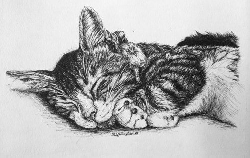 cutsom-cat-drawing