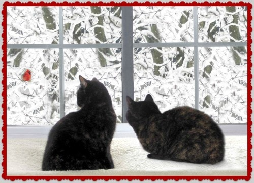 Christmas-cats-snow