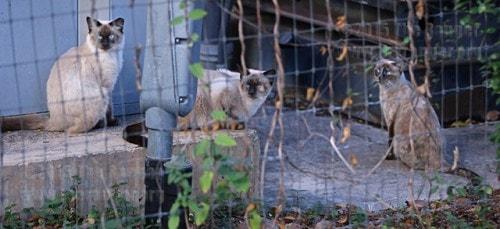 San-Antonio-feral-cats