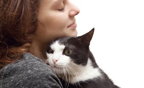 Changing a Cat's Name - The Conscious Cat