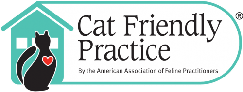 Cat_Friendly_Practice