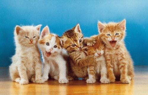 kitten-photograph
