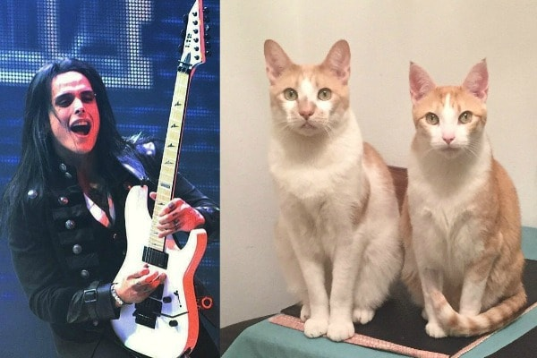 Bill-Hudson-cats-guitars