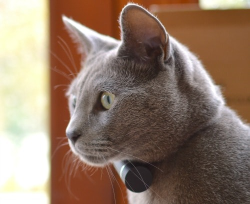 Keeping Track Of Your Cat Gps Vs Microchip Technology