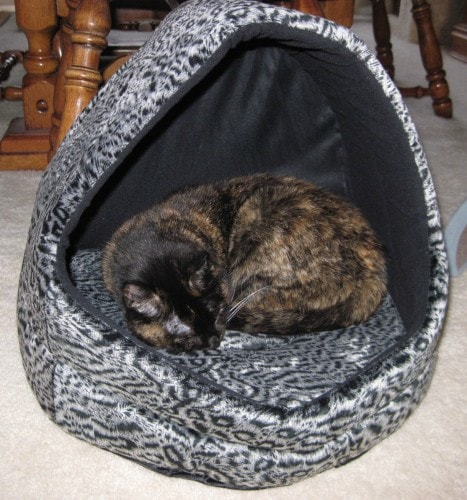 covered-cat-bed
