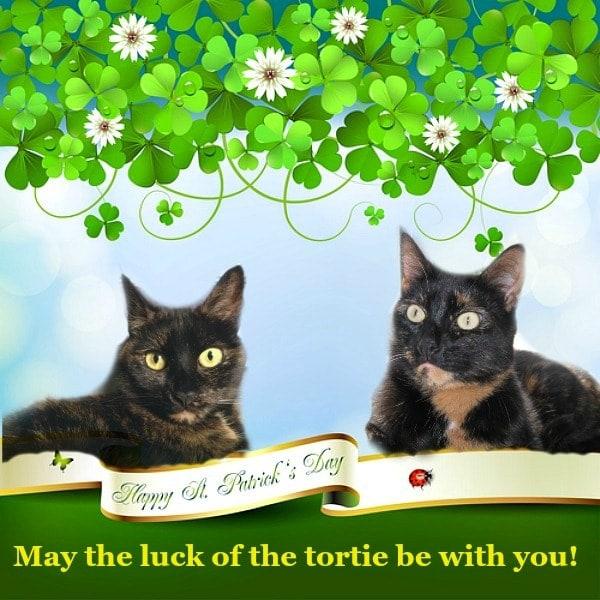 st-patricks-day-cats
