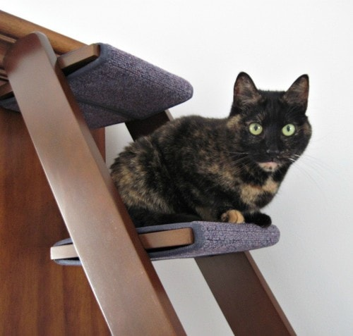 cat-ladder