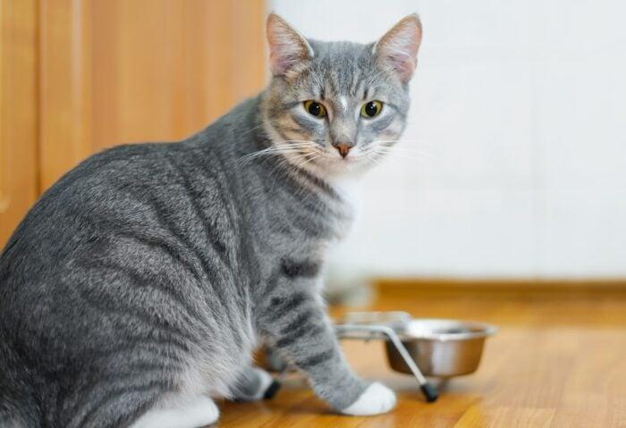 cat-mealtime