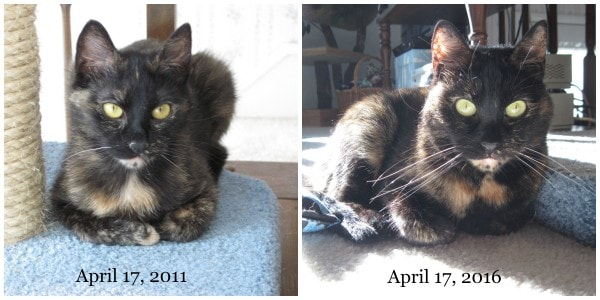 cat-adoption-anniversary