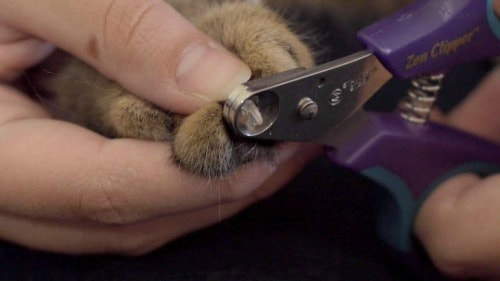Review Zen Clipper Cat Nail Trimmer The Conscious Cat