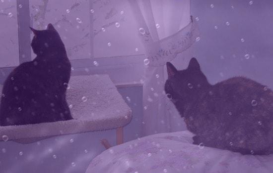 purple-rain-cats