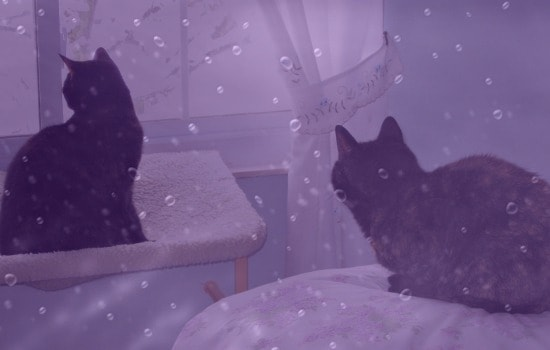 purple-rain-cats