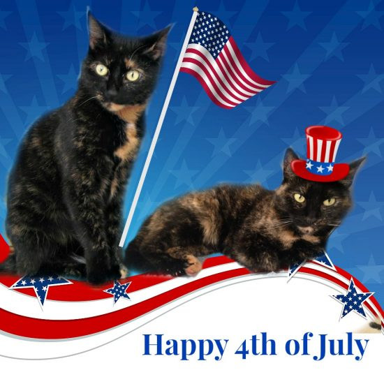 Happy 4th Of July 2014 >> Happy 4th Of July 2016 The Conscious Cat