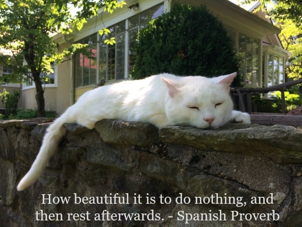 doing-nothing-cat