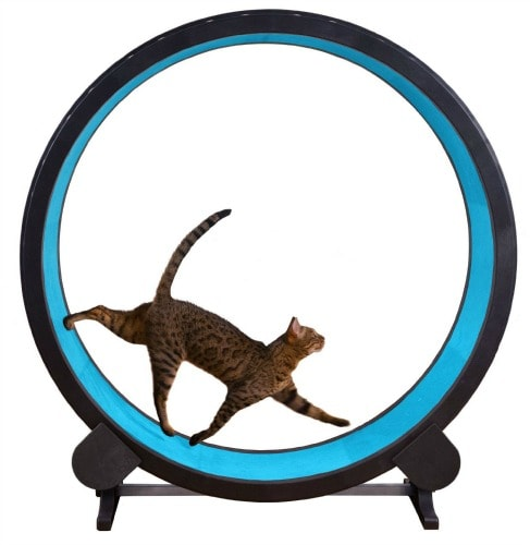 exercise-wheel-cat