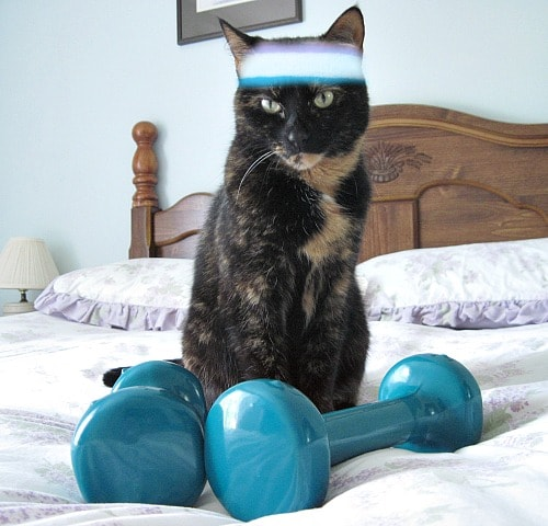 fitness-toys-cats
