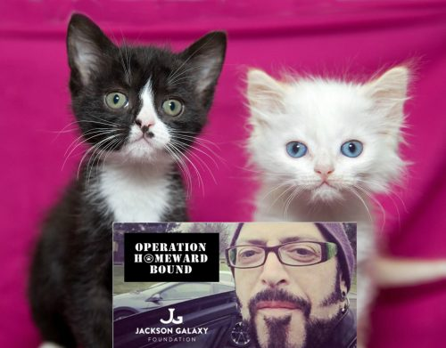 Jackson-Galaxy-homeward-bound