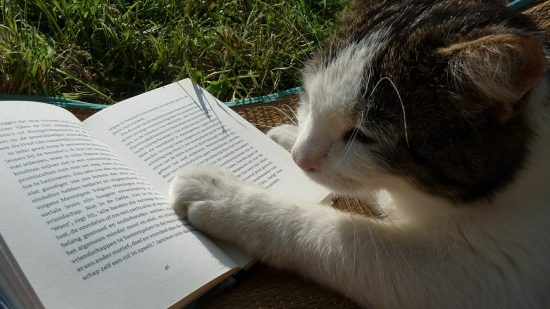 summer-reading-cat-lovers