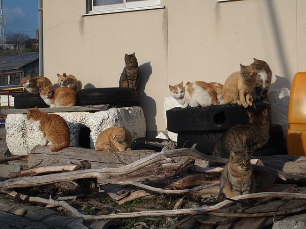 cat-island
