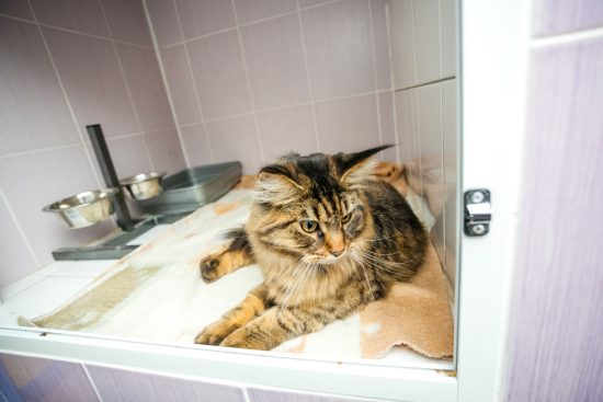 Cats love exploring their environment
