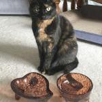 allegra-bowl-giveaway
