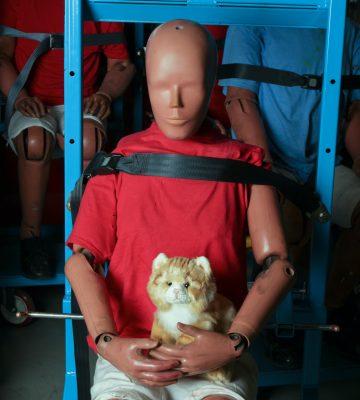 crash-test-cat